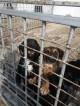 Изграждат общинския приют за безстопанствени животни в село Могила